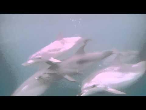 Kayak Dolphin Encounter off Pensacola Beach
