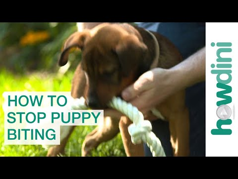 how-to-stop-puppy-biting:-training-puppies-not-to-bite