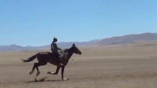 Самый быстрый скакун Найманнын шабысы