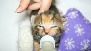 Kittens Bottle Feeding Cutest Moments