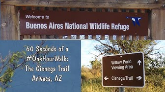60 Seconds of a #OneHourWalk - Cienega Trail, Arivaca, AZ