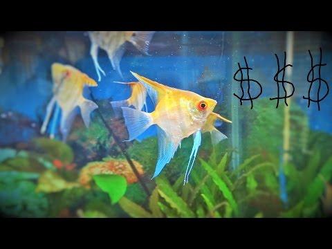 Breeding Fish For Money. Is It Profitable? Can You Make Money Breeding Fish?