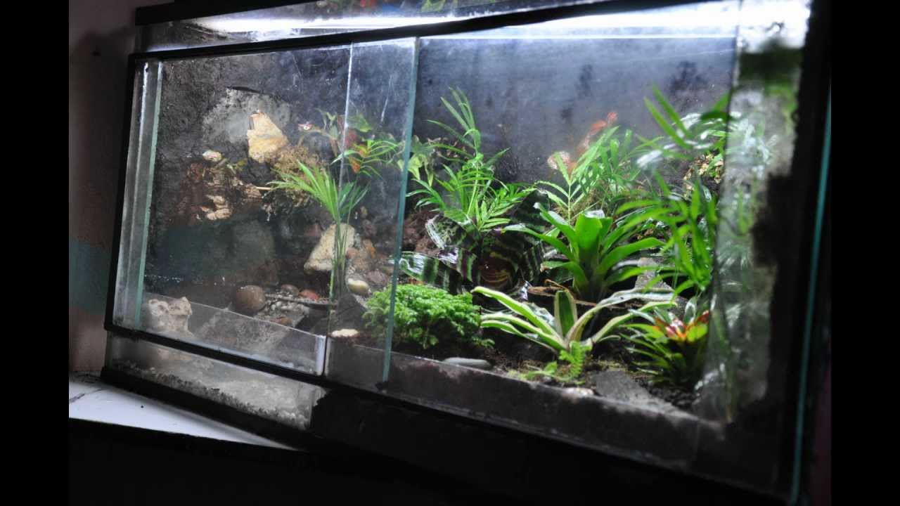 Paludarium For The Amazon Milk Frog Youtube