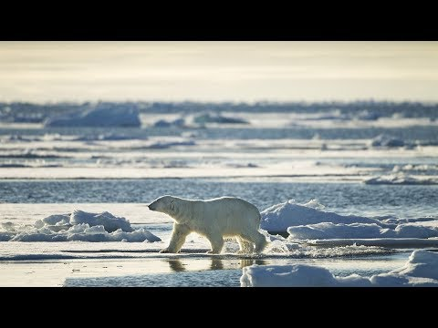 CLIMATE CHANGE: Rising Temperatures Impact On Polar Regions And Glaciers