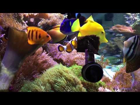 My Clownfish Loves Nori