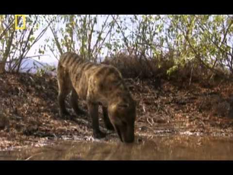 Depredadores prehistóricos (El cerdo asesino)