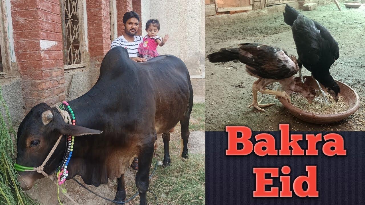All Aseel Lovers Happy Eid Mubàrak By Zaheer Abbas