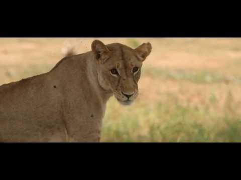 CHEM CHEM Safari Lodge