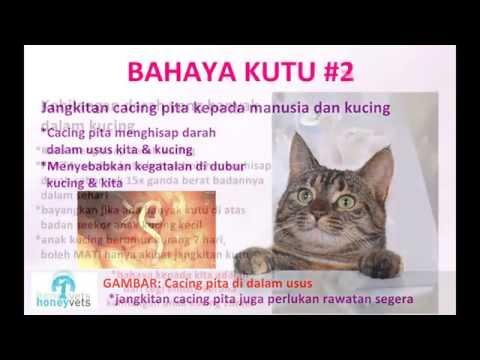 Cara Agar Kucing Bebas Kutu Funnycat Tv