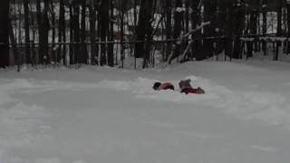 Cockapoo Vs. Cockapoo: The Big Dog Race In The Snow | Barrie, Ontario