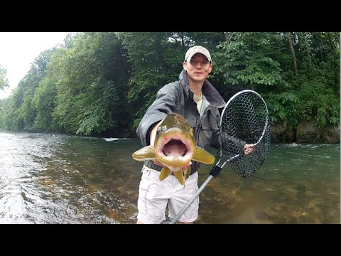 Into the Fog - Watauga River Fly Fishing Tennessee