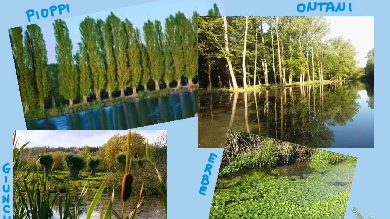 Flora e fauna fiume | Flora, Fauna, Del's