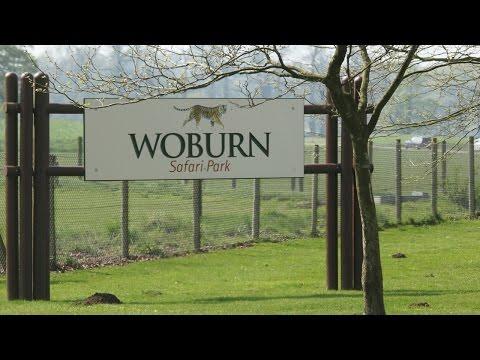 Vlog #3 | Day Trip to Woburn Safari Park | Bedfordshire, UK