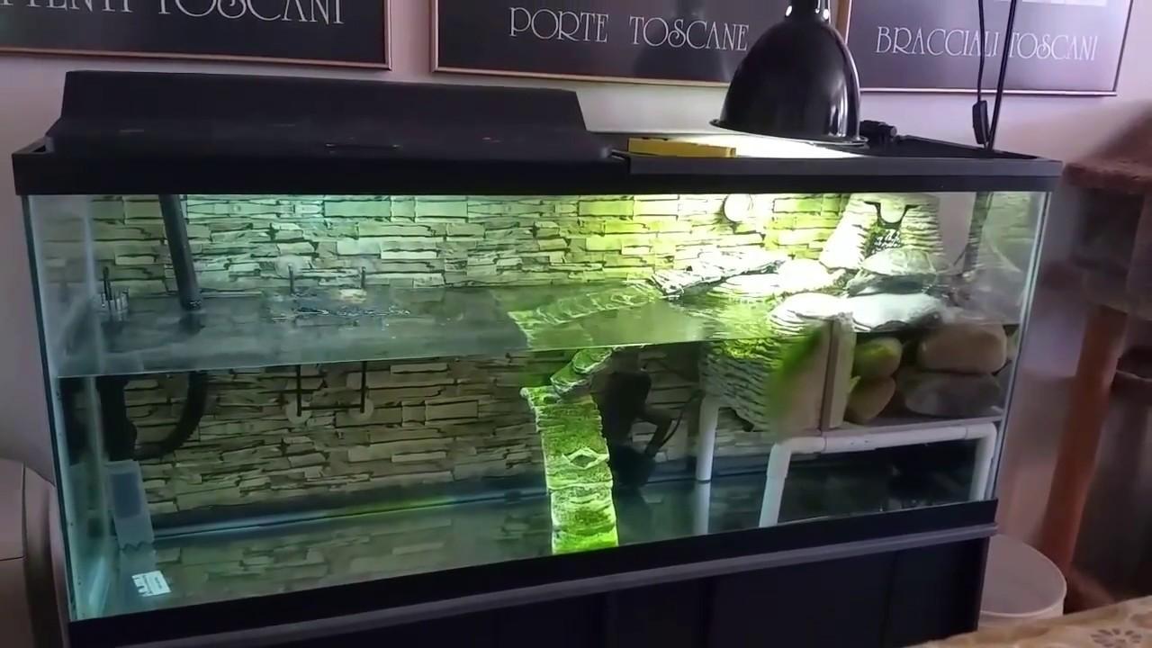 My Pretty 55 Gallon Turtle Tank Youtube