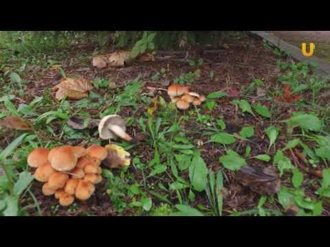 UTV. Новая волна грибов. Что собирать в башкирский лесах в октябре?