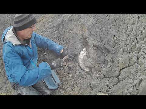 Fossil Hunting Episode 35, Part2 -  Speeton 06.05.19