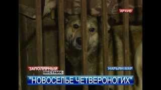 Новый приют для собак построят в Нарьян-Маре в 2014 году