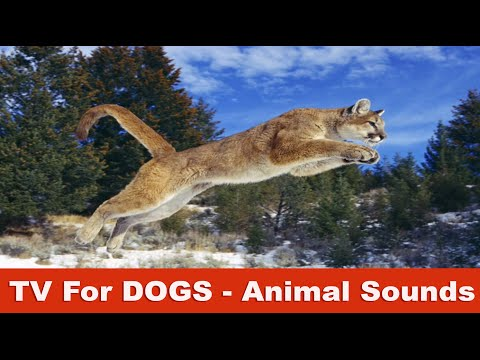 Animal Sounds TV for Dogs