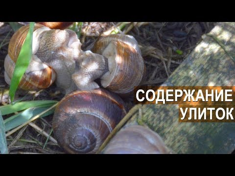 Фермер Сергей Балаев. Содержание, разведение и выращивание улиток. Улиточный бизнес