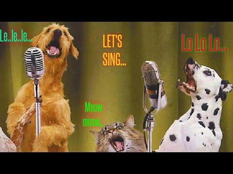 Another Level Singer💗🐕🐕    Training Dog    Singing Dog   
