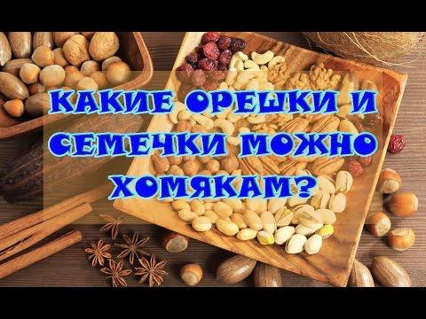 Вопрос: Можно ли давать хомякам бананы?