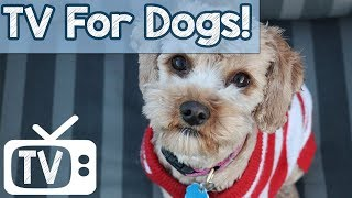 TV For Dogs - Videos to Relax Your Dog - Lullabies to help with separation anxiety and loneliness