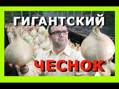 ✅【доставка】 киев | днепропетровск | харьков | житомир | львов | полтава | запорожье. Man kung mk-rb007bk, лук man kung mk-rb007bk цена.