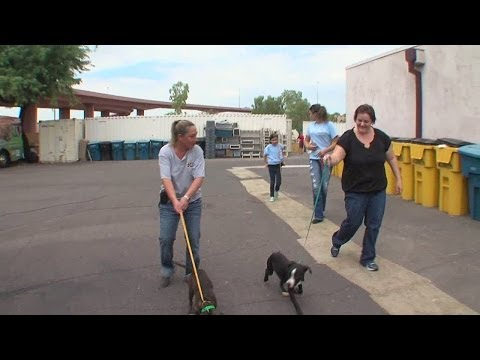 Volunteer opportunities at Maricopa County Animal Care & Control