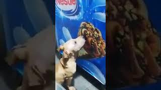 Pets love || Funny animals || Lần trước con Sen cho ăn ngon lắm mà :(, sao mình nếm ko có vị gì nhỉ
