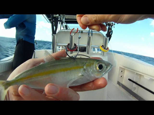 live bait miami | where to buy or catch live bait in miami, florida., Fishing Bait