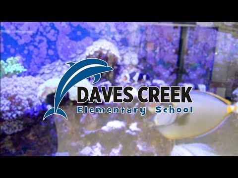 Welcome to Daves Creek Elementary School