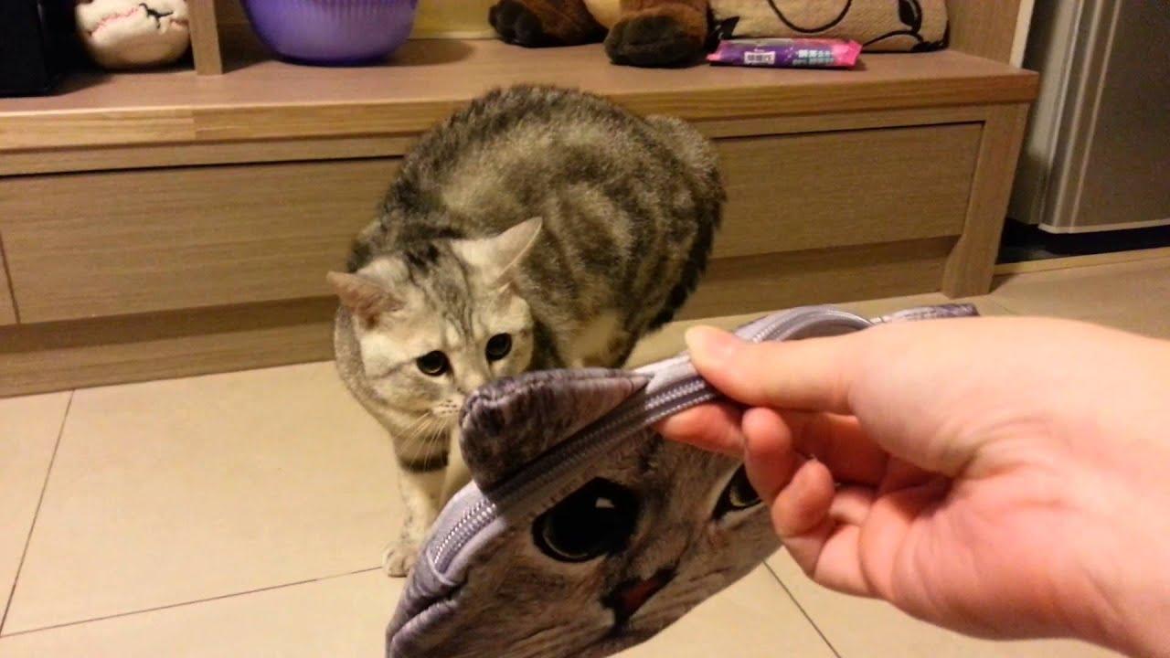 貓炸毛 - YouTube