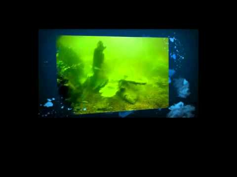 Rockford IL Fish Tank Cleaning (Aquarium Cleaning Illinois)