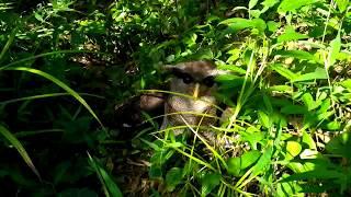 Burung Aneh Besar di Hutan Belantara Aceh