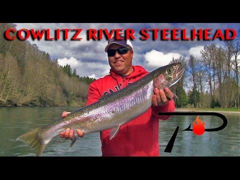 Cowlitz River Steelhead