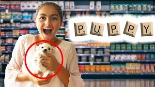 I'll Buy Whatever you SPELL Challenge!! New PUPPY 🐶