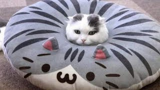 Funny cat cucumber videos