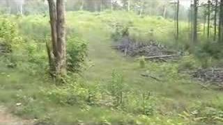 Healthy Hardwoods Regeneration Harvest