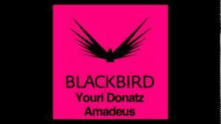 Youri Donatz - Amadeus
