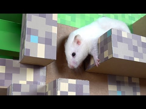 Hamster in Minecraft Cube Maze