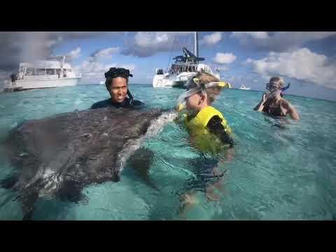 Cayman Islands Stingray City And Starfish Point