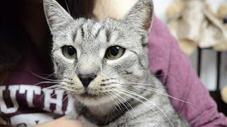 Jak sprawdzić stan zdrowia kota przy adopcji? - Koci Poradnik #3 [Blogodynka]