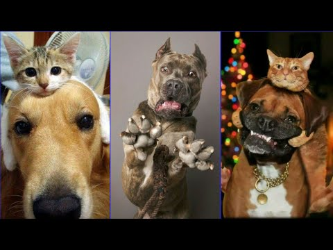 Why These Cats and Dogs Are So Funny?   TikTok January 2020  Kittens and Puppies Cute Compilation