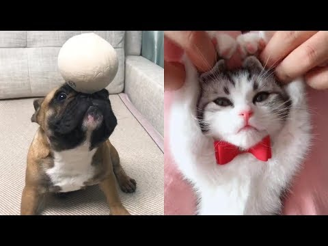Funny Pet Videos Compilation P6