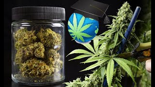 Drying, Curing Cannabis Plants Guide – CHEAP & EASY Best Practices