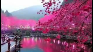 heart touching voice by shaikh qari ameer shamim