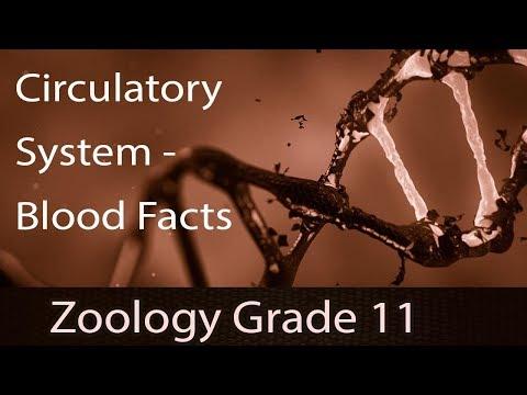 Circulatory System | Human Circulatory System [Double Circulatory Pathway] | Blood Facts | Part 2 B