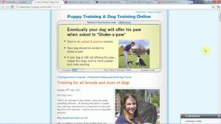 Dog Commands - Take Control Of Your Dog Today!