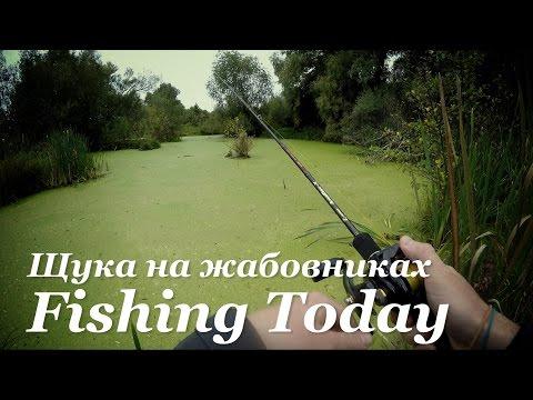 """Способы ловли щуки по """"Жабовникам"""" - Fishing Today"""