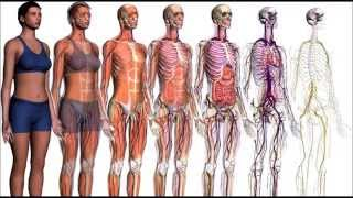 Repeat youtube video MINERALES ESENCIALES PARA EL CUERPO HUMANO